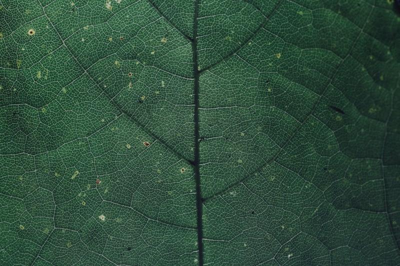 Ein Blatt in Nahaufnahme, bei dem man jede Faser erkennt, um die Genauigkeit und Auflösung zu verdeutlichen